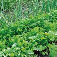 Zelenina bez chemie…