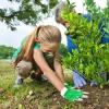 Základní pravidla výběru rostlin do zahrady a hlavní zásady jejich vysazování