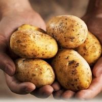 Jak správně přihrnovat brambory. Víte jak na to?