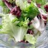 Sklidili jste poslední salát a rádi byste měli další? Koncem měsíce ho můžete opět vysévat ze semen…