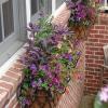 Také rostlinám v truhlíku je v tomto počasí horko, poradíme co s tím!