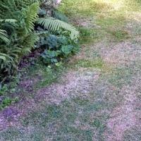 Vypálilo vám slunce čerstvě posekaný trávník? Poradíme, jak ho ošetřit!