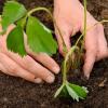Zahradnický kalendář – srpen