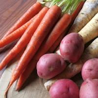 Chcete mít i v zimě čerstvou kořenovou zeleninu? Uložte ji do rašelinového substrátu!