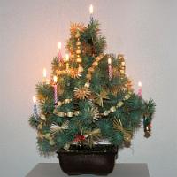 Živý vánoční stromek v nádobě? Proč ne!