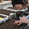 Právě teď je ten správný čas na výsevy zeleniny, kterou budeme následně pěstovat ve skleníku…