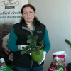 Videonávod na přesazení pokojových rostlin