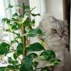 Návod na pěstování fíkusů doma i v kanceláři