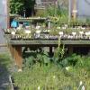 Doba výsadby bylinek je tady. Víte jak správně postupovat?