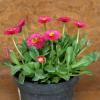 Víte, co jsou jarničky a jak je správně pěstovat? Poradíme vám!
