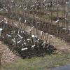 Výsadba prostokořených ovocných stromků na poslední chvíli…