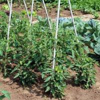 Se suchem je třeba začít bojovat hned od začátku vegetace!
