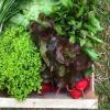 Pojďte s námi pěstovat bio zeleninu, 4. díl