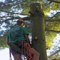 Proč je lepší si na prořezávání a kácení stromů pozvat odborníky?
