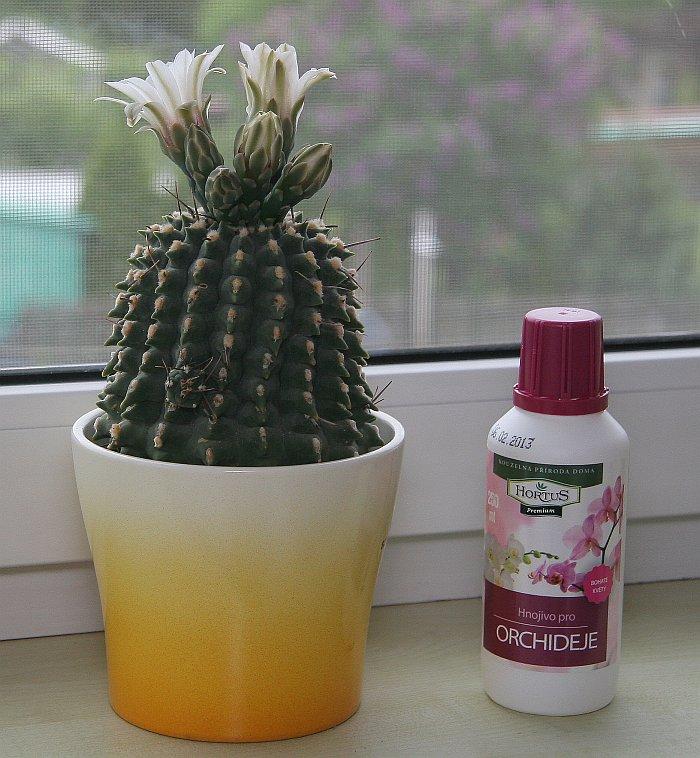 kaktus_hnojivo