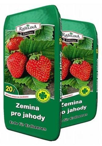 zemina_jahody