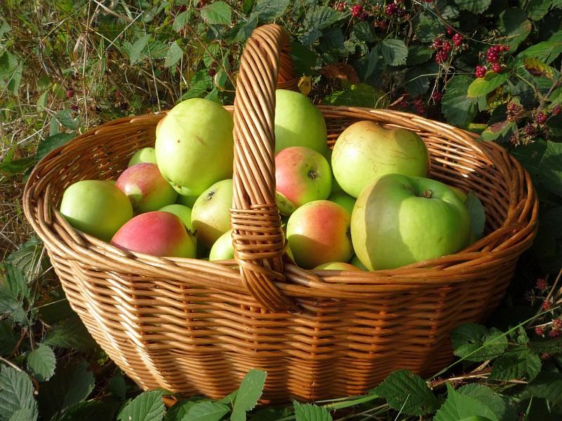 kos_jablka