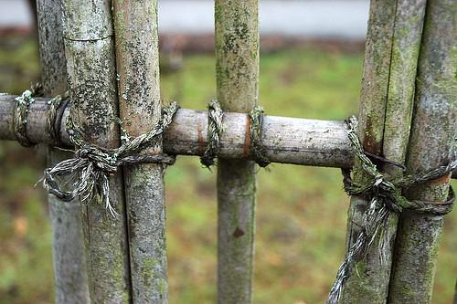 bambus_plot_2
