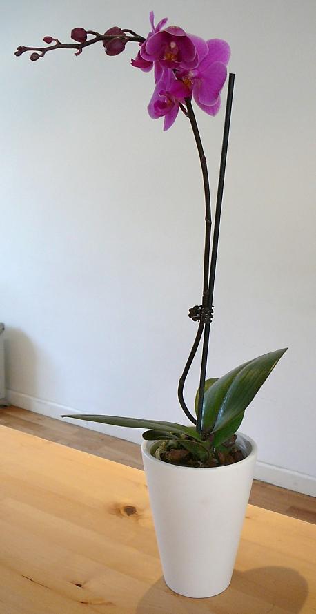 orchidej_kvetnik