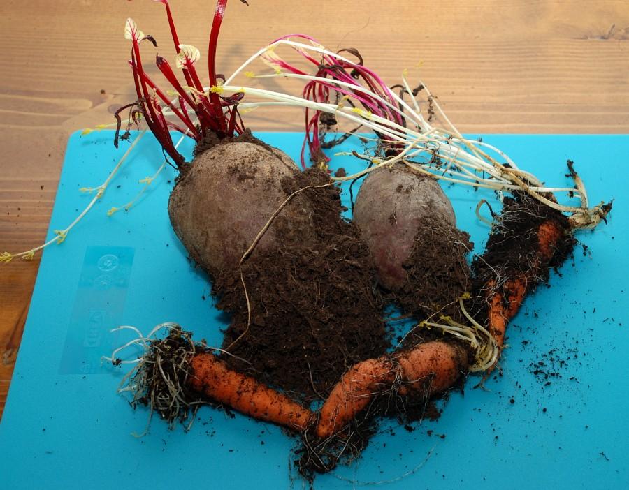 Podoba uskladněné zeleniny