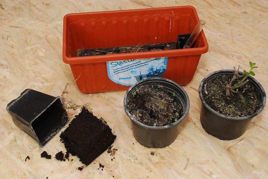 1 Starý substrát zbylý po pěstování