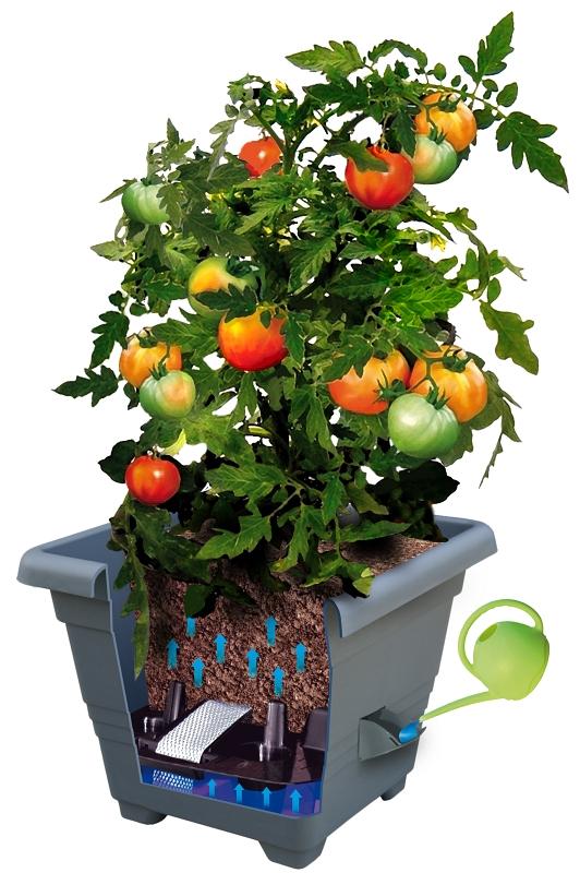 Samozavlažovací truhlíky se hodí i na pěstování rajča na balkoně