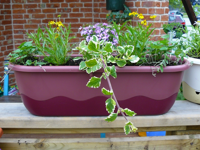V samozavlažovacím truhlíku balkonové rostliny suchem rozhodně netrpí!