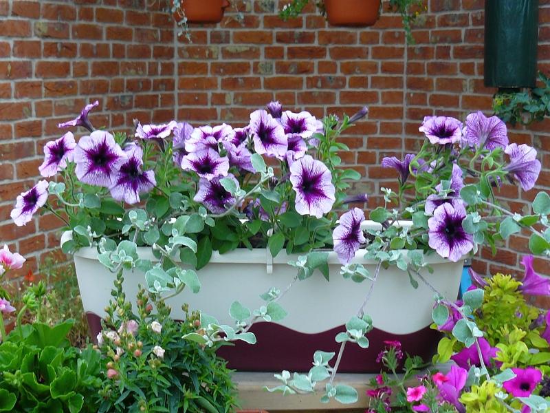 Záplava barevných květů je možná i díky pravidelnému přísunu vody