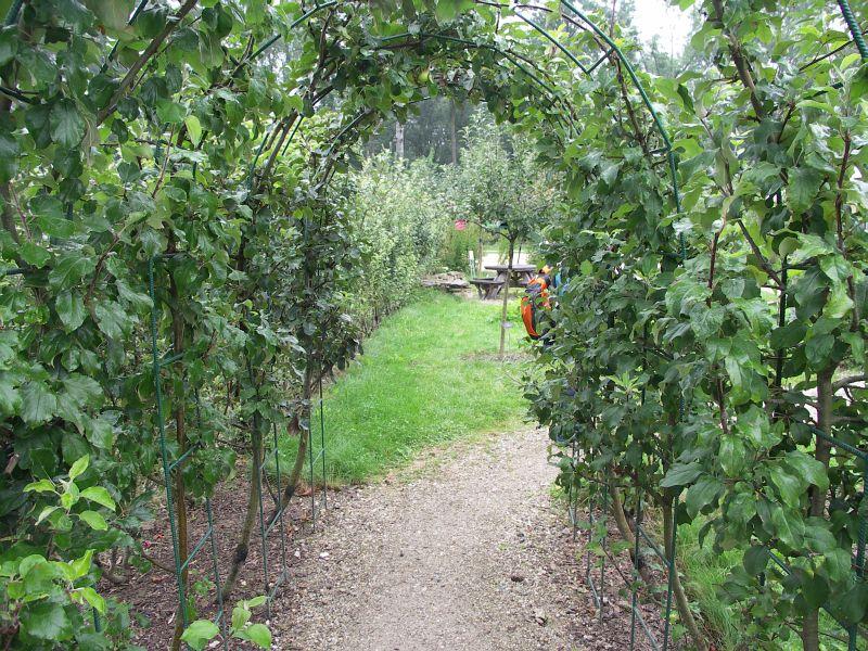 Jednoduché loubí - průchod tvarovaný z jabloní na jaře krásně kvete a v době sklizně může lákat svými chutnými plody