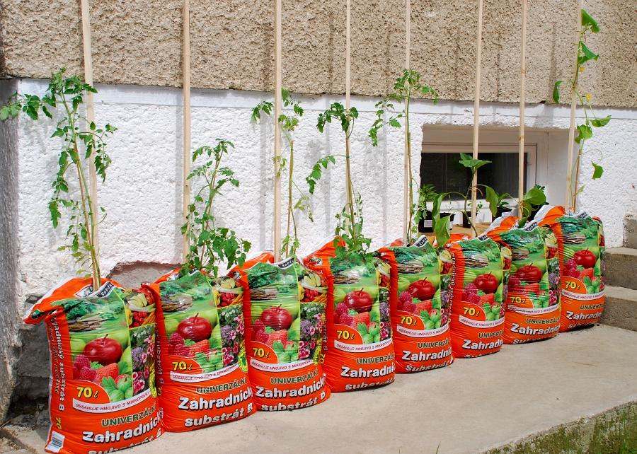 Vysazení rostlin