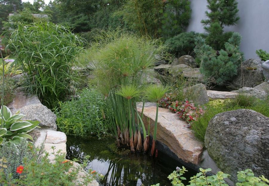 Ukázka bohaté vodní vegetace