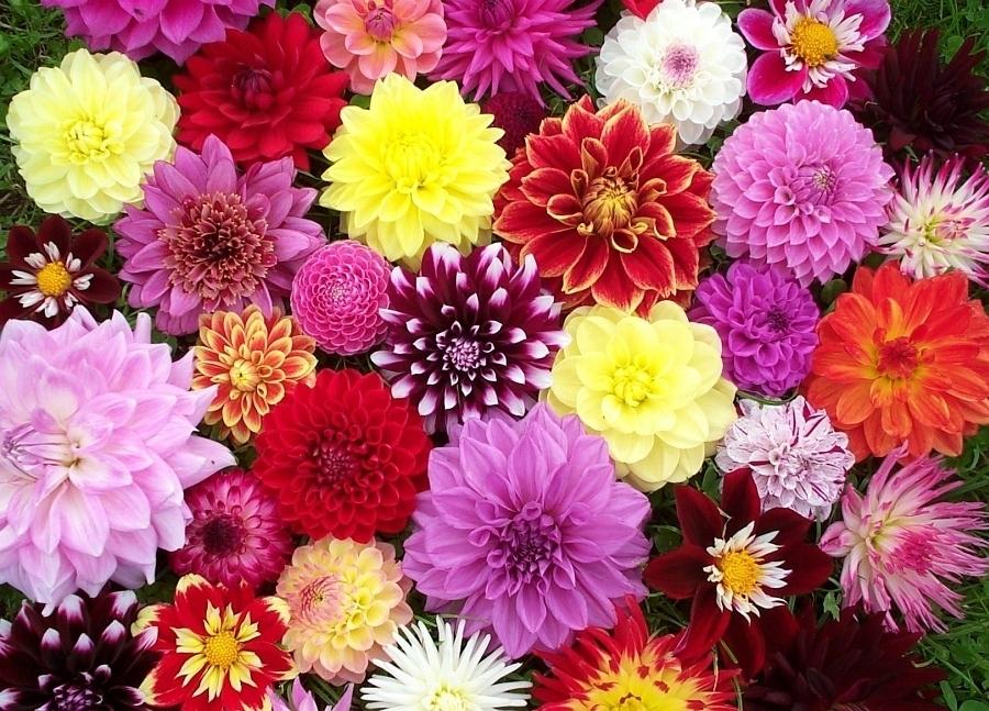jiriny_kvety